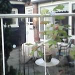terras bij voordeur